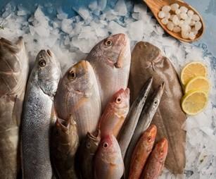למה חשוב לאכול דגים?
